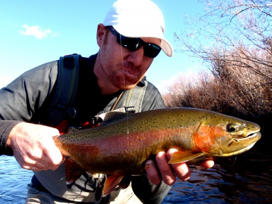 Rainbow Trout on Higa's S.O.S. Nymph