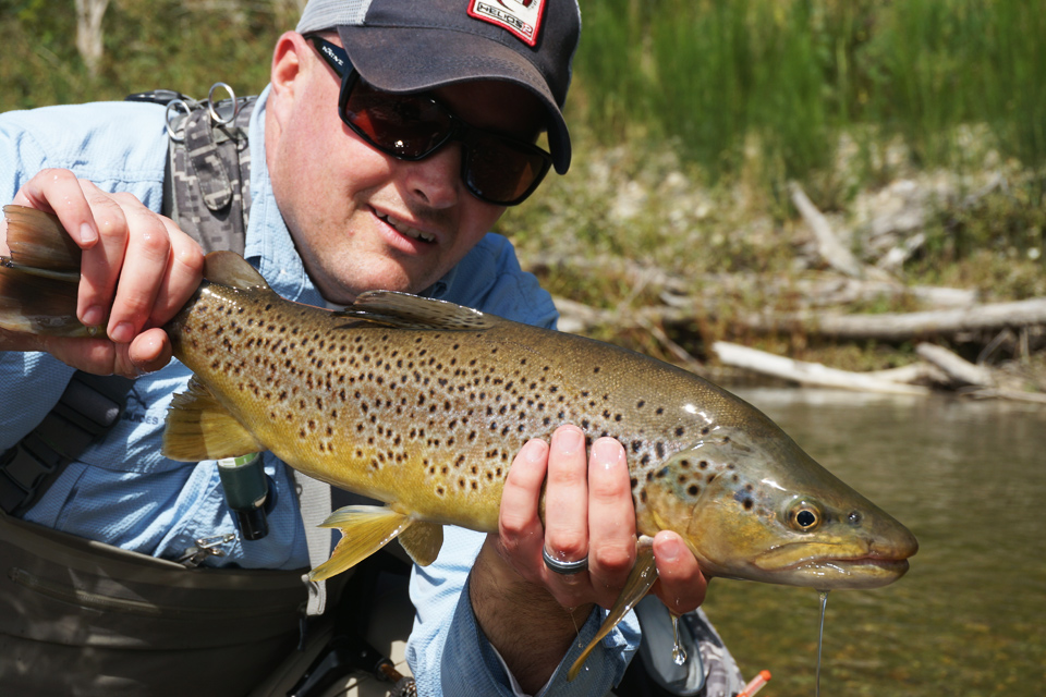 First New Zealand Brown Trout